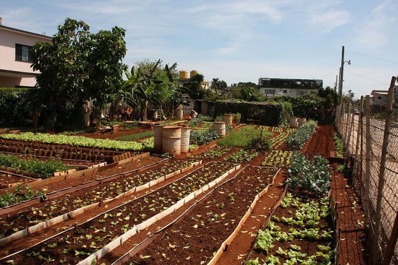 Small urban agriculture business in Havana, Cuba. Wikimedia Commons/Susanne Bollinger