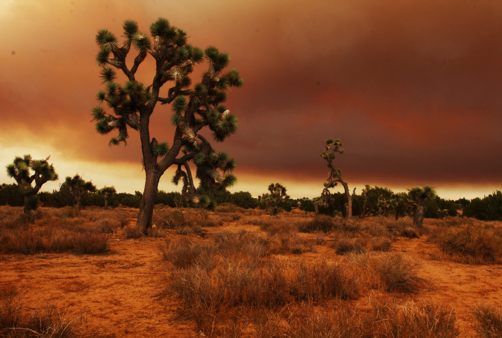 Fire in the Mojave Desert. Flickr/Creative Commons/Rennett Stowe