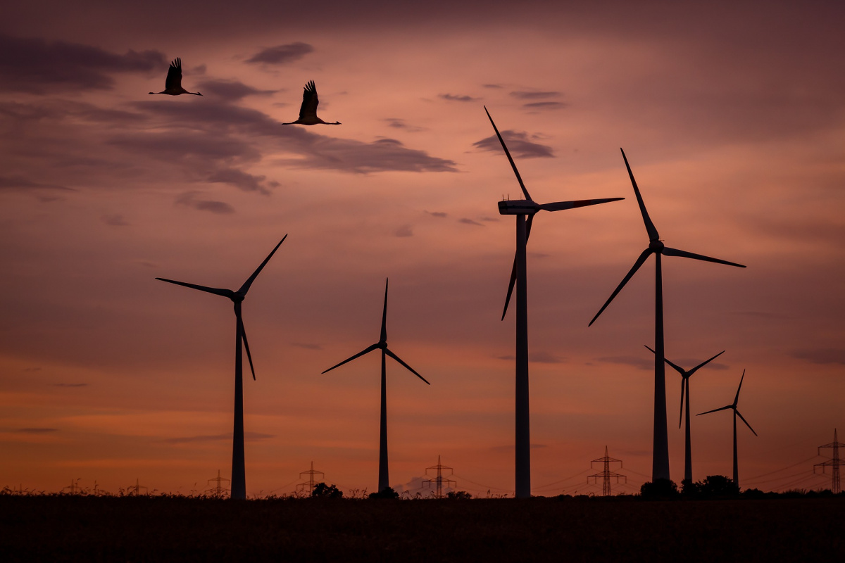 Birds fly past windmills at dusk.