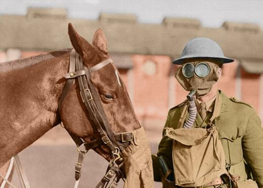 Even Animals Needed Gas Masks in World War I
