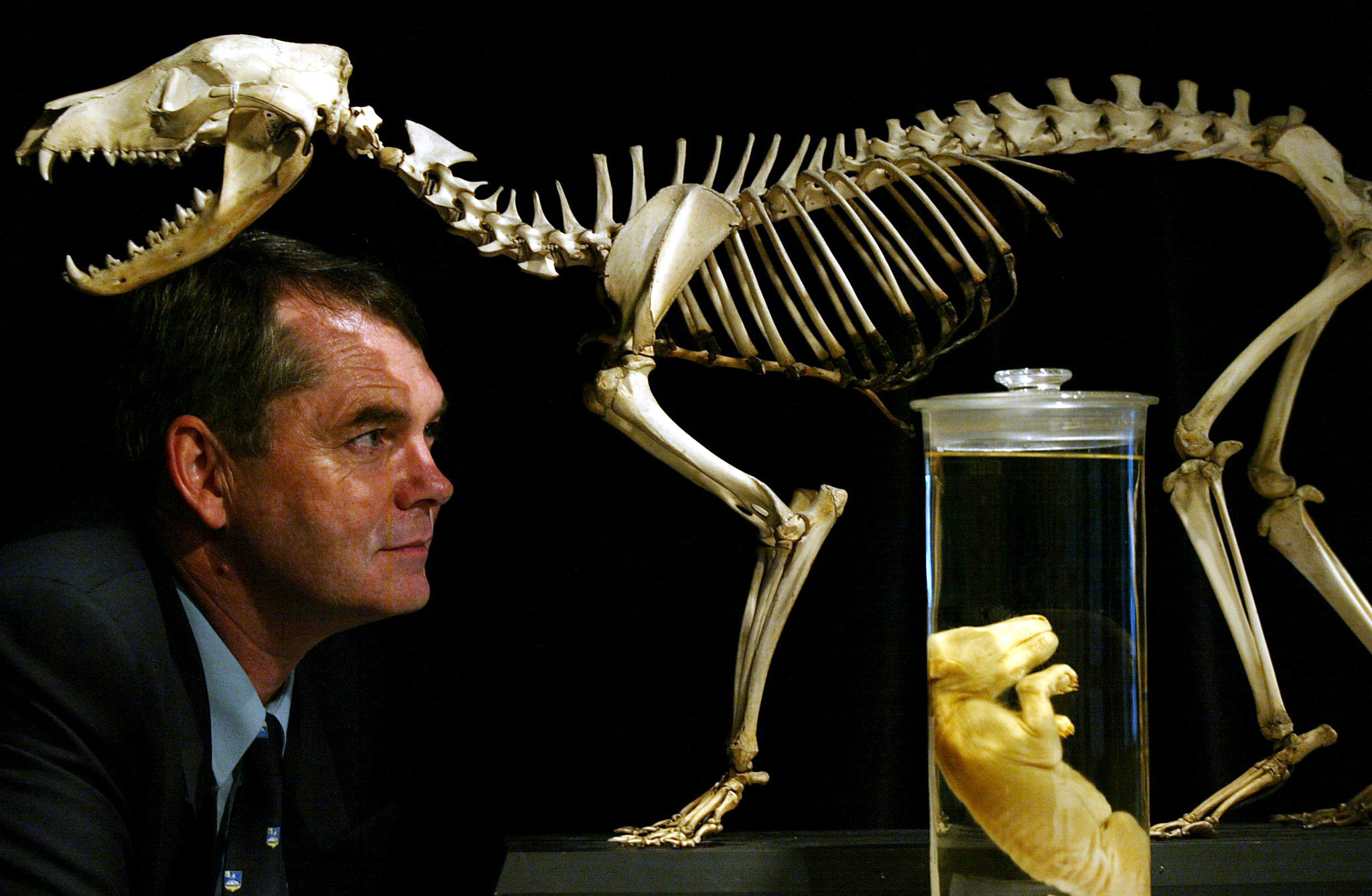 How the Mis-Measurement of the Tasmanian Tiger Led to its Extinction
