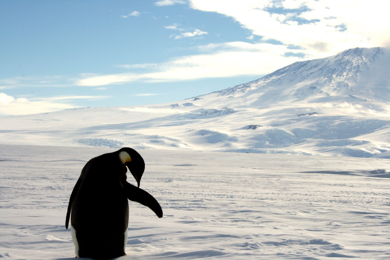 Antarctica Is An Environmental Disaster Just Waiting To Happen - The National Interest Online