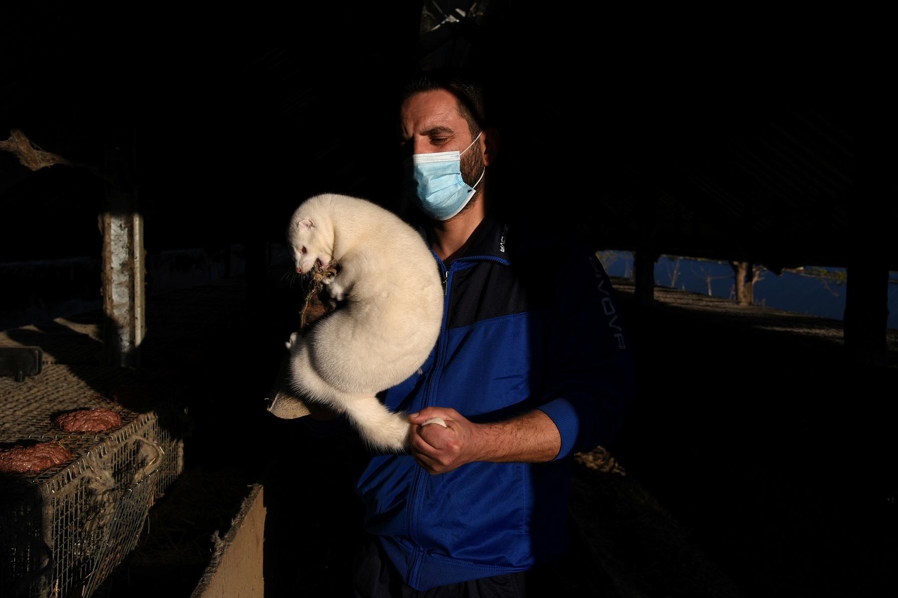 How Coronavirus Mutations in Animals Affect Human Health