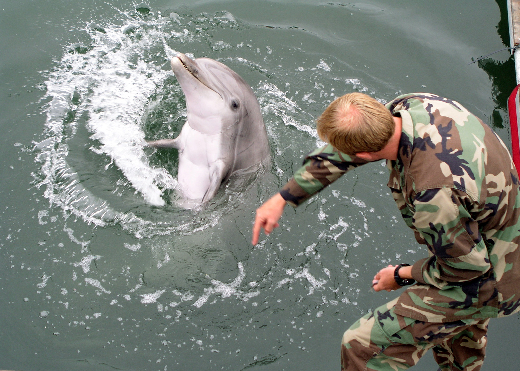 Russian Officer Claims Moscow Had Psychic Soldiers and Telepathic Dolphins