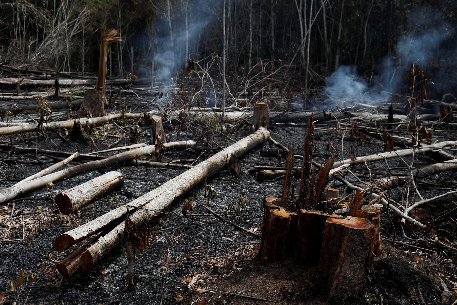 Bolsonaro's Conspiracy Theories Are Making Brazil's Rainforest