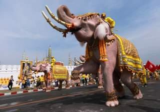https://pictures.reuters.com/archive/THAILAND-KING-CORONATION-ELEPHANTS-RC1E4B312540.html