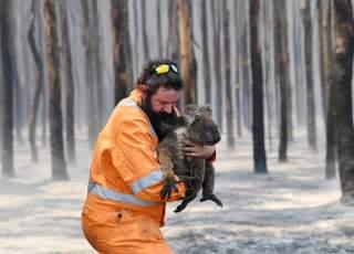 Adelaide wildlife rescuer Simon Adamczyk is seen with a koala rescued at a burning forest near Cape Borda on Kangaroo Island, southwest of Adelaide, Australia, January 7, 2020. AAP Image/David Mariuz/via REUTERS