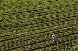 A farmer walks through a field bordering Highway 99 in Turlock, California April 22, 2015. REUTERS/Robert Galbraith
