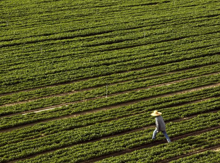 A farmer walks through a field bordering Highway 99 in Turlock, California April 22, 2015. REUTERS/Robert Galbraith